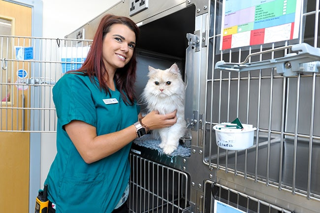 cave vets cattery