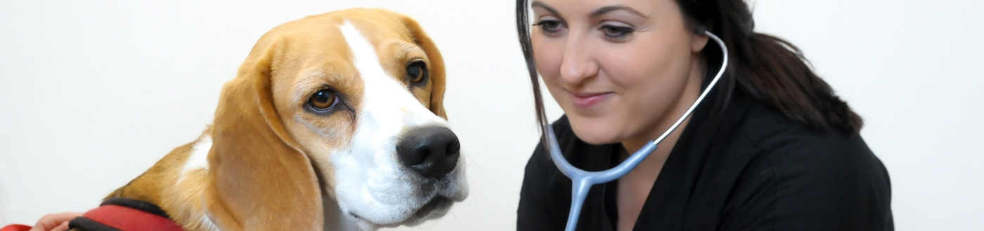 Pet Owners | Cave Veterinary Specialists