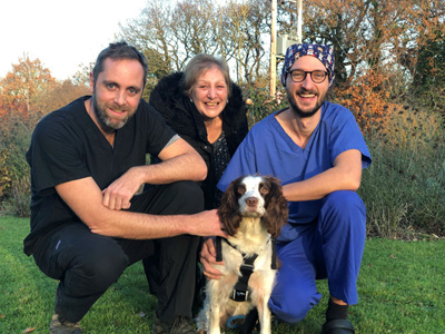 Springer Spaniel Star with Cave Veterinary Specialists Clinicians