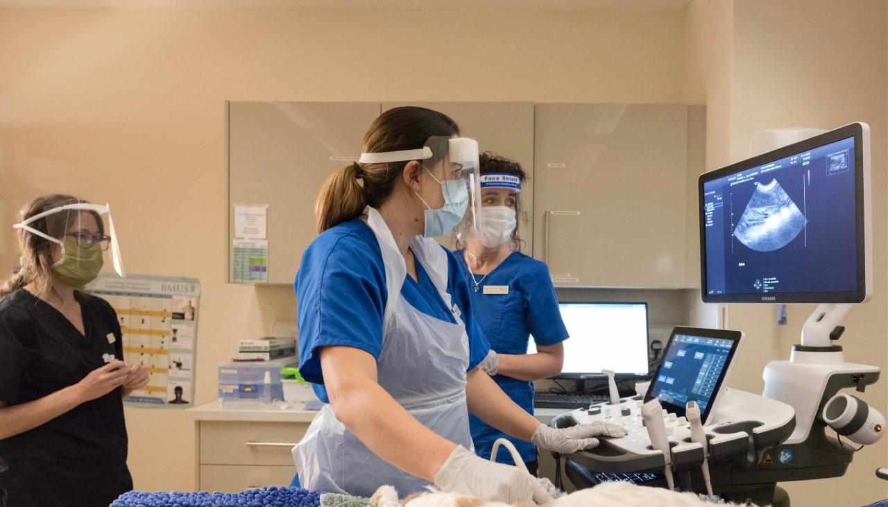 Veterinary Imaging