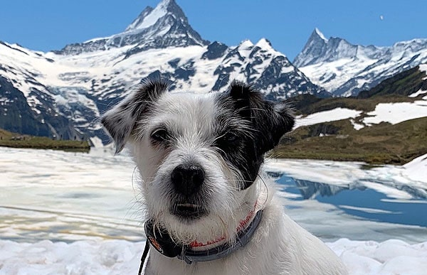 daisy-mountain-trip